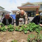 春野菜の植栽活動(古川西部デイサービスセンター)